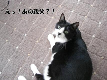 CIMG4346.jpg