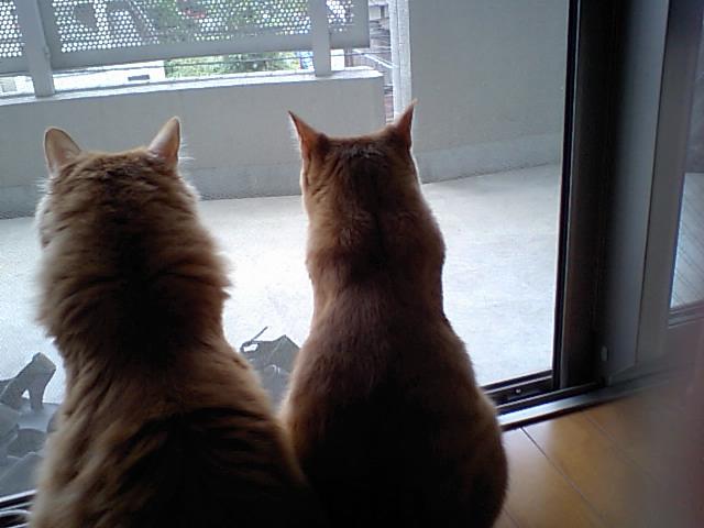 窓辺の猫ズ