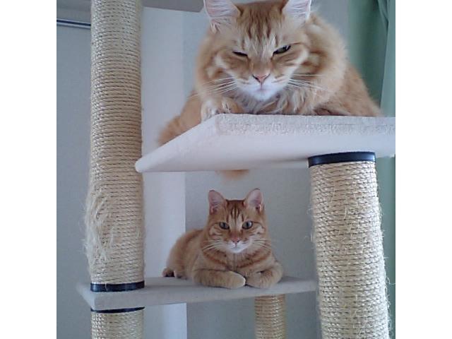 そそ、これこうやって上下に座ってな・・