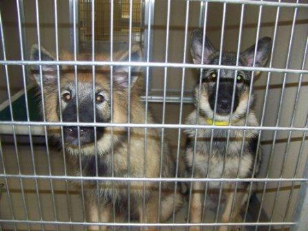 Pups in FL