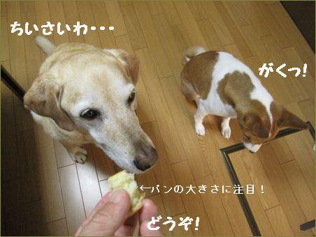 小さいパンです。
