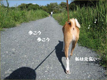 青空の散歩は気持ちがいいです。