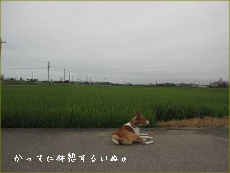 こんな日はのんびりお散歩です。