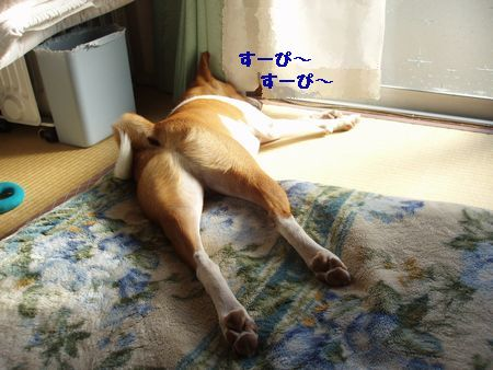 ふて寝しています。
