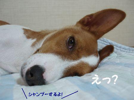 のんびり寝てる君だよ!
