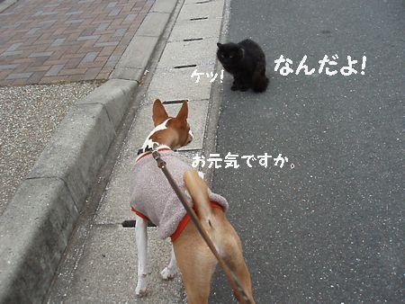 引っ掻いた猫とは違います。