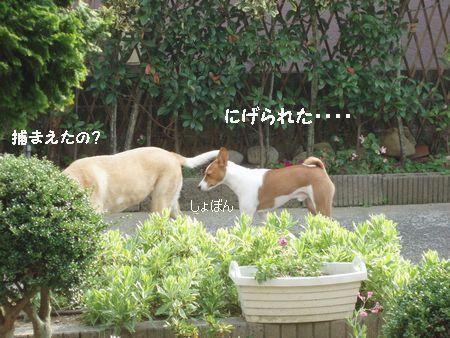 預かって飼い主を探す基本料金が15万円