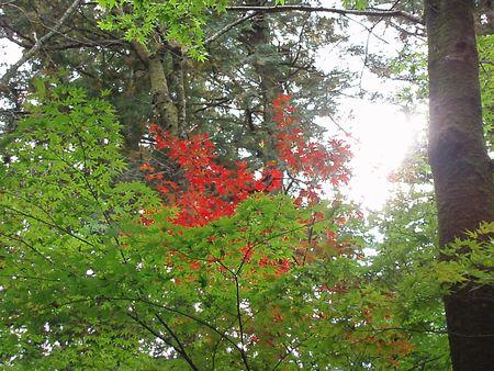 紅葉したらきれいです。