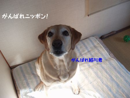 今度は5月ね! がんばれニッポン!
