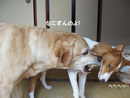 ガンバレはなちゃん!