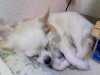 20090910枕元でおやすみ (1)