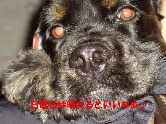 20071111100129.jpg