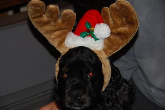 画像 reindeer KEN