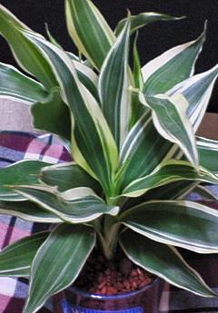 観葉植物14