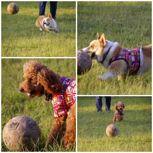 ボール大好き^^
