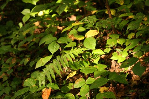 秋の山道-植物