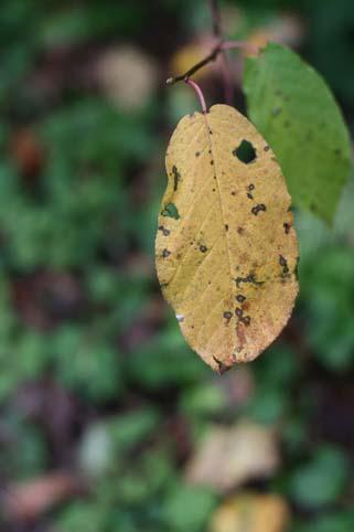 秋:枯れ葉っぱ