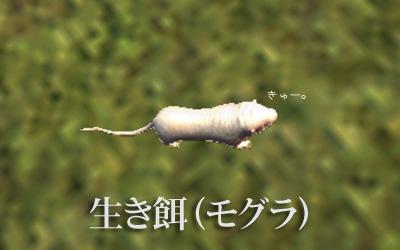 生き餌(モグラ)
