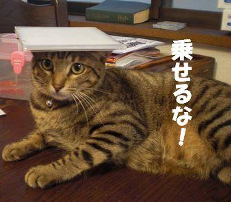 10/3 きなこ