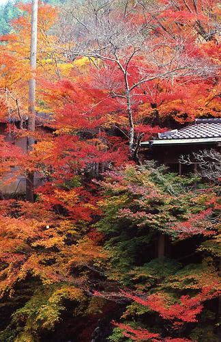 京都西明寺01-縦500