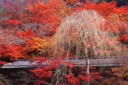 京都西明寺04-800
