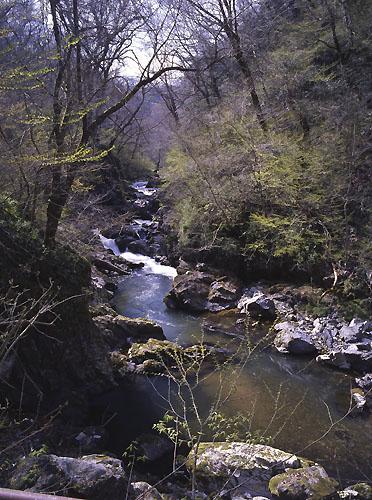 渓流の芽吹き
