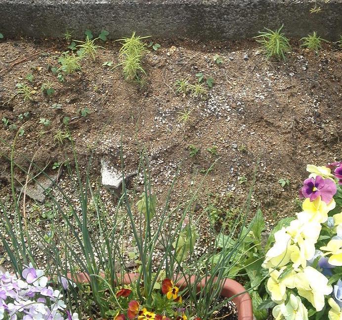 店前花壇・2011春