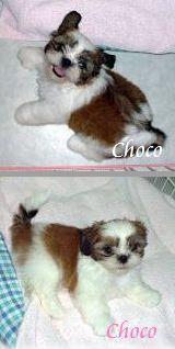 chochan3.jpg