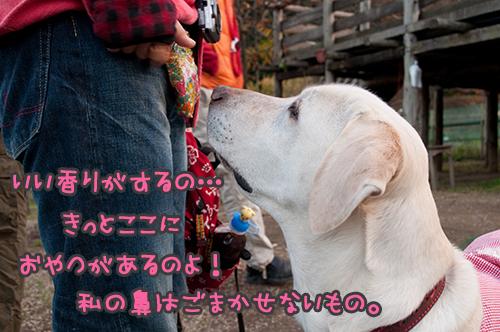 8_20101201213820.jpg