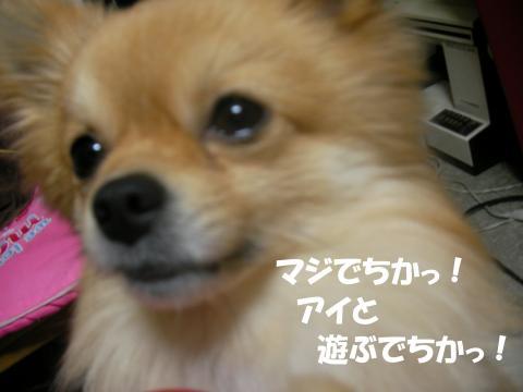 SA080222f_convert_20080227030117.jpg