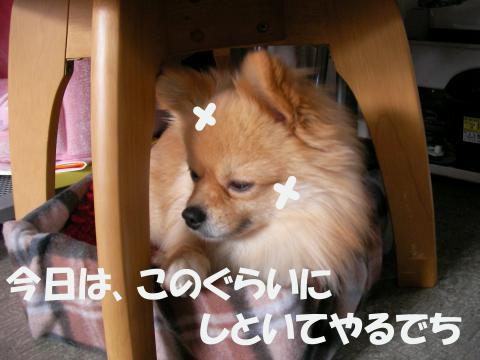 SA080224i_convert_20080227032827.jpg