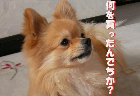 SA080224j2_convert_20080302010505.jpg