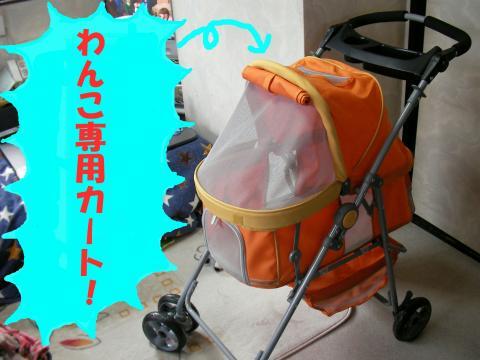SG080301l_convert_20080302011722.jpg