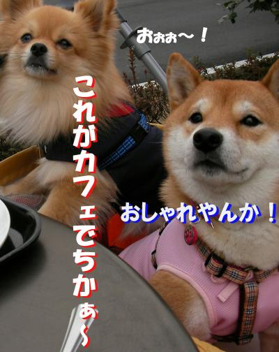 SW080303t_convert_20080304232626.jpg