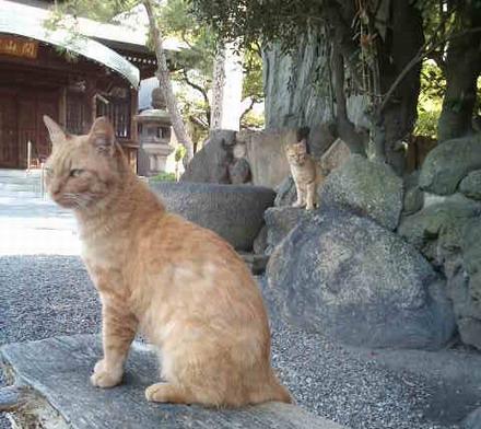 お寺ネコ2