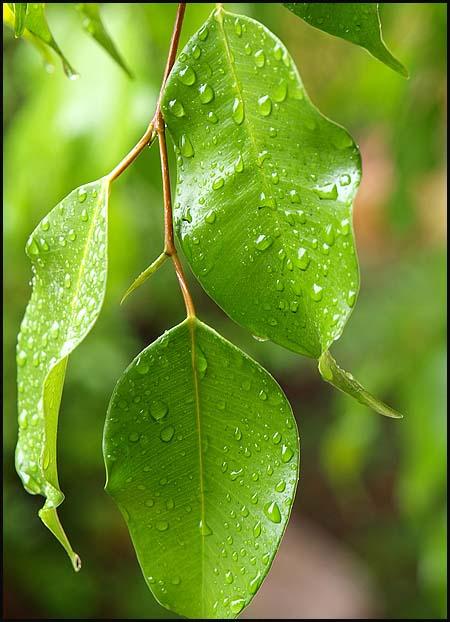 rain1014-2.jpg