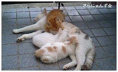 マオと3匹の子猫