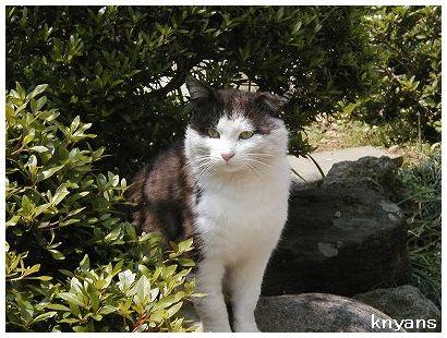 外猫レオ(3)