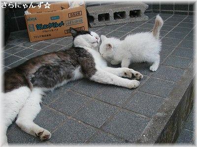 レオおじさんと子猫