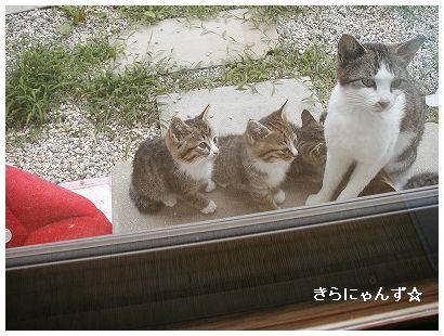 みりぃと子猫4匹