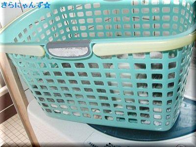 キラと洗濯かご(1)