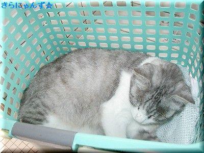 キラと洗濯かご(2)