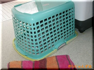キラと洗濯かご・その4