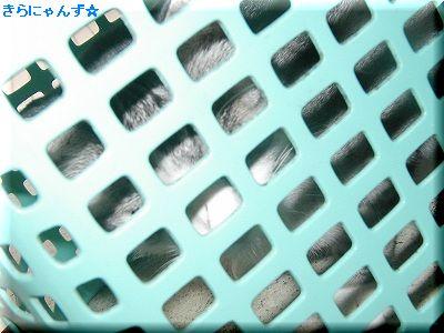 キラと洗濯かご・その6