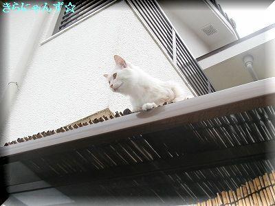 りん屋根の上〈1〉