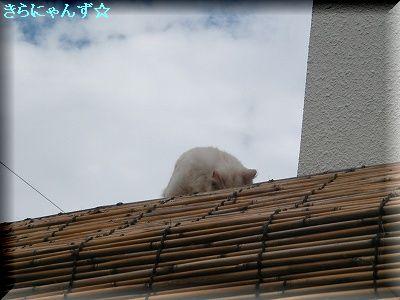 りん屋根の上〈3〉