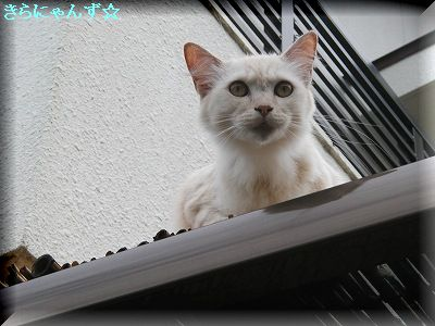 りん屋根の上〈4〉