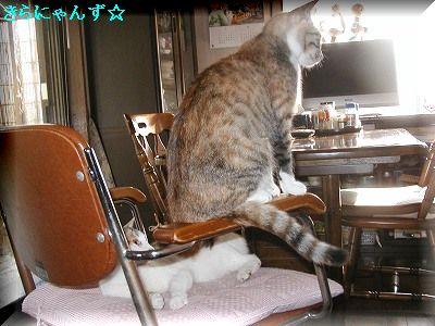 愛用の椅子・1