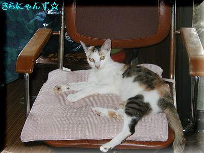 愛用の椅子・2