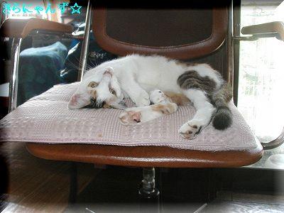 愛用の椅子・4